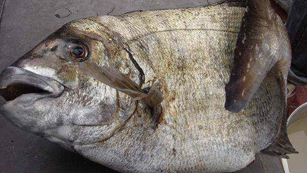 Le blog de Flodem  Voici mon blog! Un blog de pêche en mer du bord en